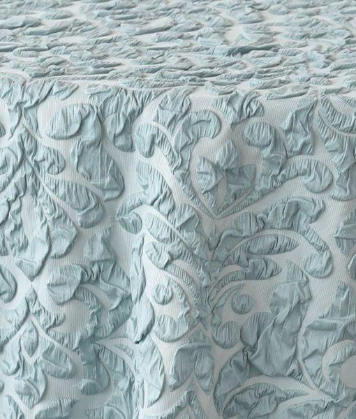 light blue scalla - close up